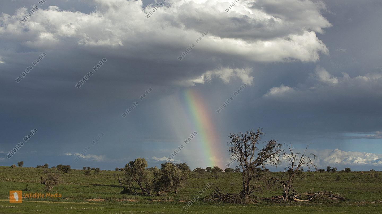 Regenbogen in der Kalahari