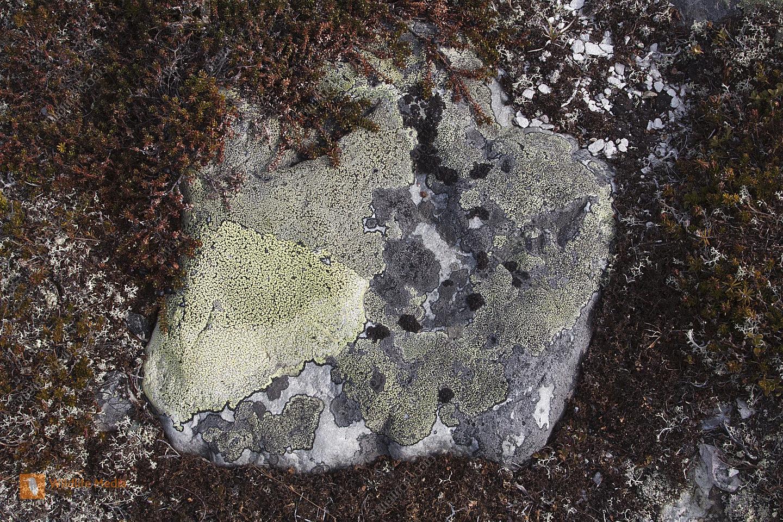 Fels und Landkartenflechte