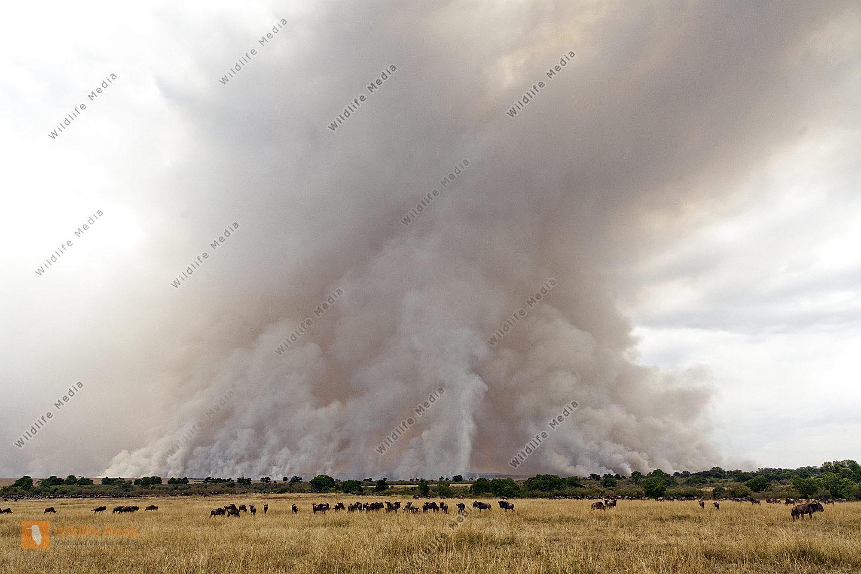 Brandrodung im Triangle der Masai Mara
