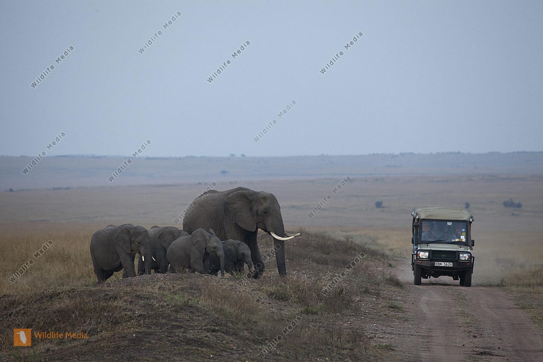 Afrikanischer Elefant und Safarifahrzeug
