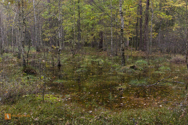 Sumpflandschaft in den Masuren