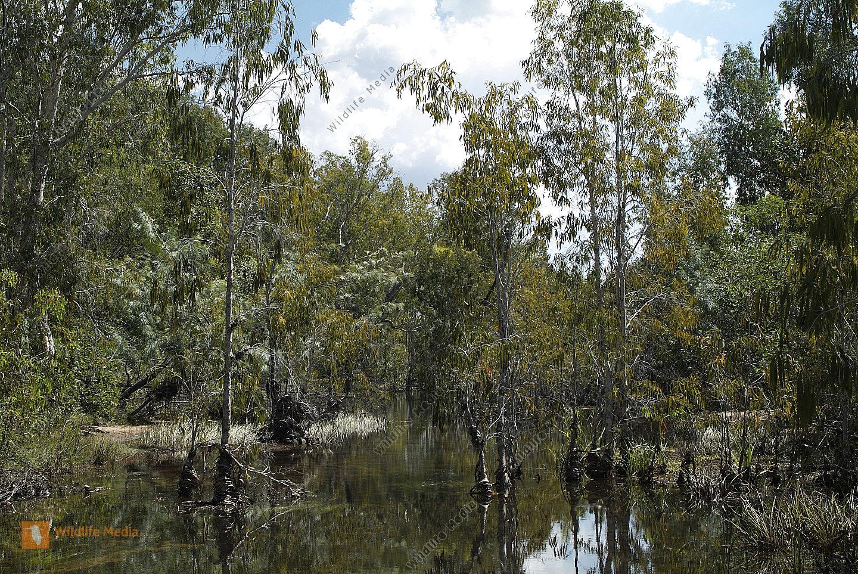 Australien Gewässer mit Paperbark Trees im Nitmiluk Nationalpark