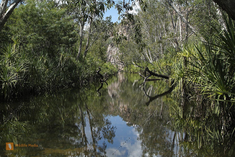 Australien Gewässer mit Pandanas und Paperbark Trees im Nitmiluk Nationalpark