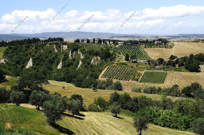 Italien Landwirtschaft in der Toskana