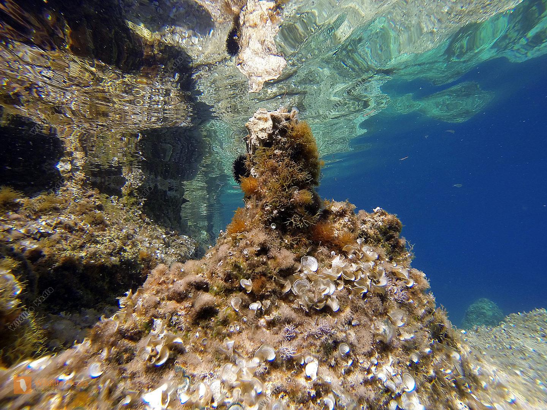 Mittelmeer-Unterwasser