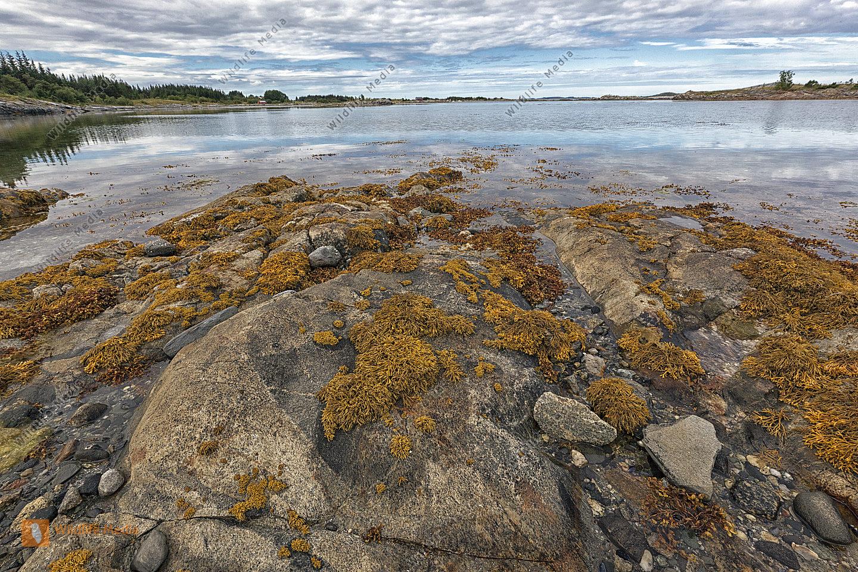 Steinformation an der Küste von Norwegen