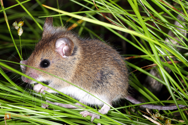 Mäuse Bilder