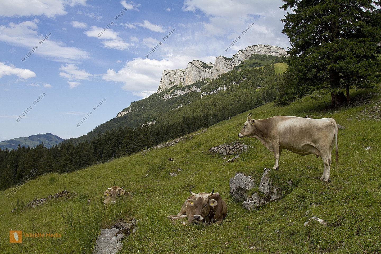 Appenzellerland Säntis Gebiet