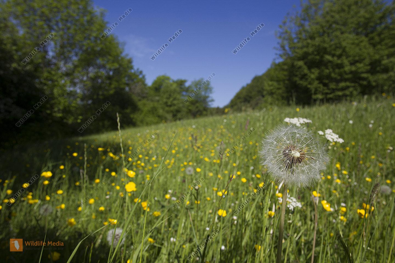 Frühling Spring