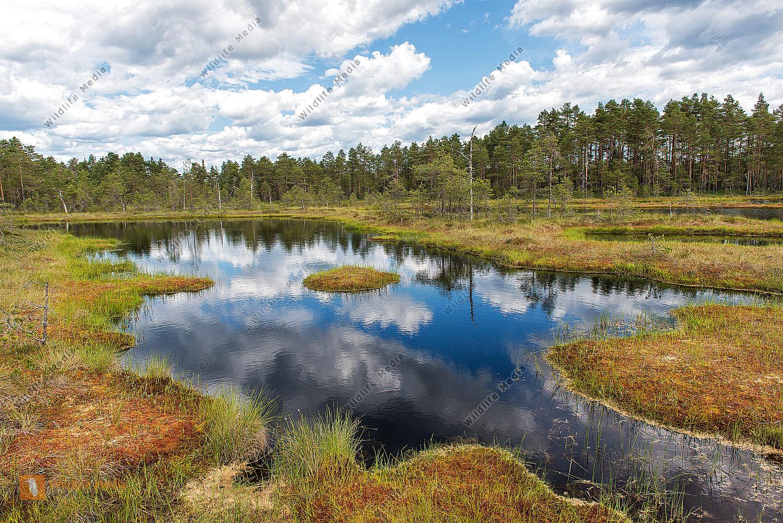 Hochmoor Västmanland Schweden Hill moor Sweden