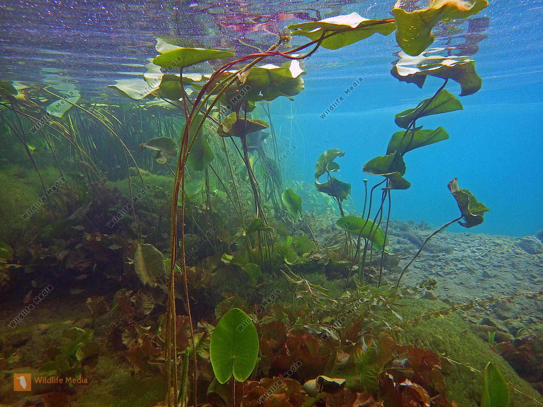 Zrmanja Unterwasserlandschaft