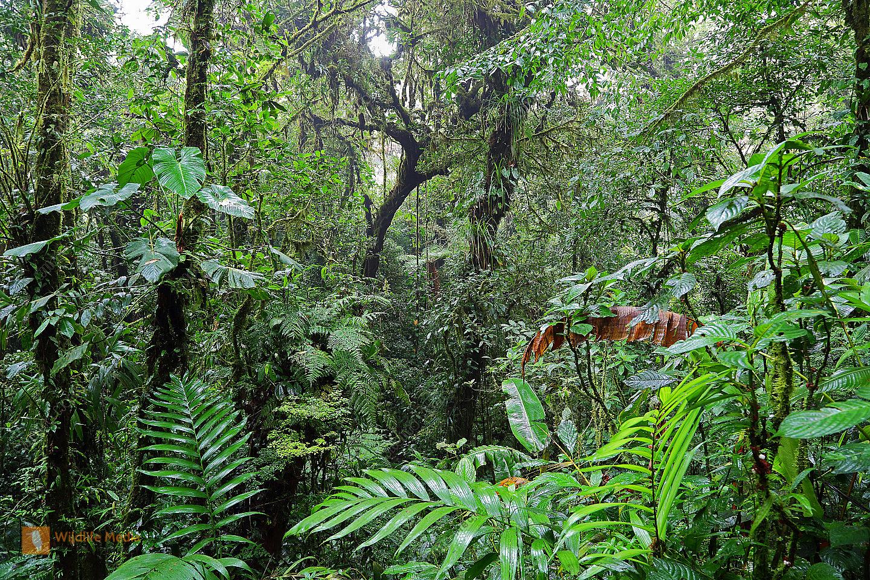 Nebelwald Monteverde