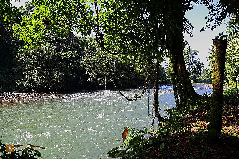 Regenwaldfluss