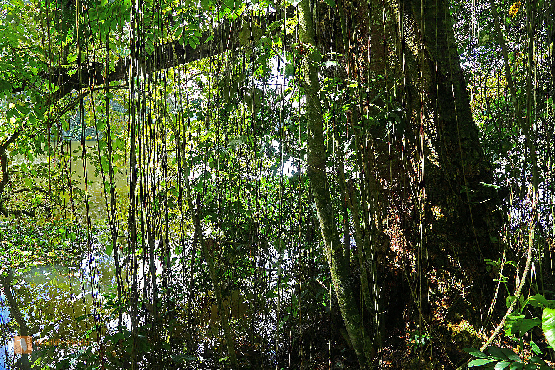Regenwaldsee