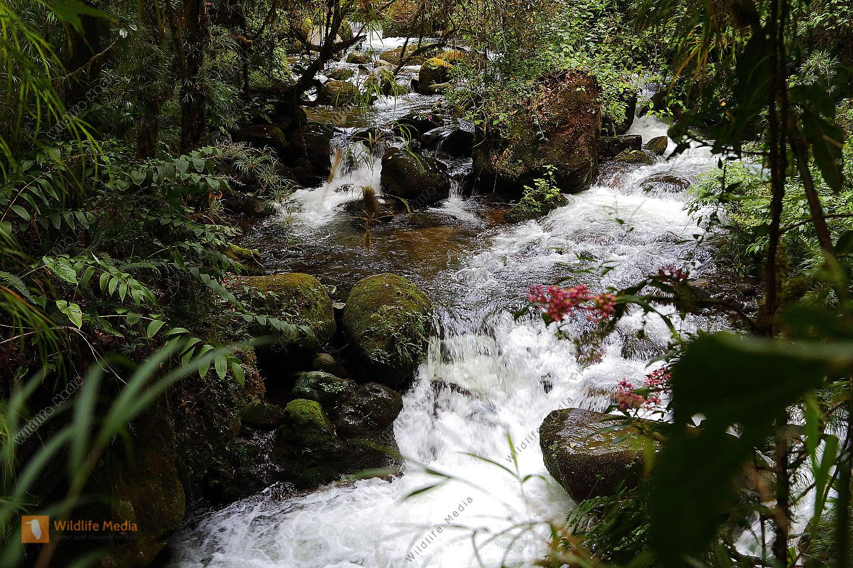 Bergregenwald-Fluß