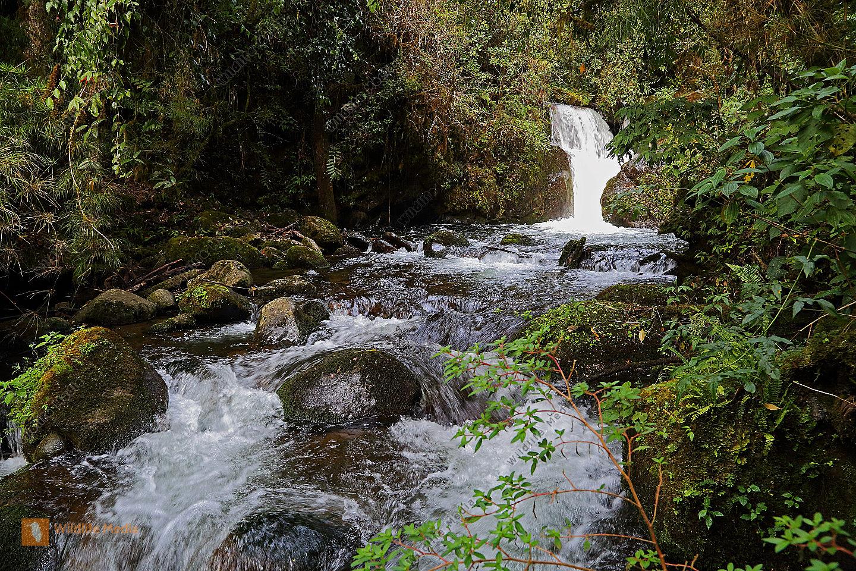 Wasserfall Bergregenwald