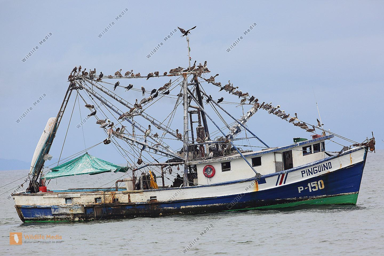 Fischerboot mit Seevögel