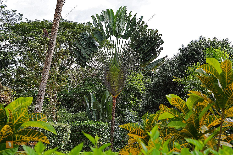 exotische pflanzen bilder wildlife media bildagentur natur und umwelt im bild. Black Bedroom Furniture Sets. Home Design Ideas