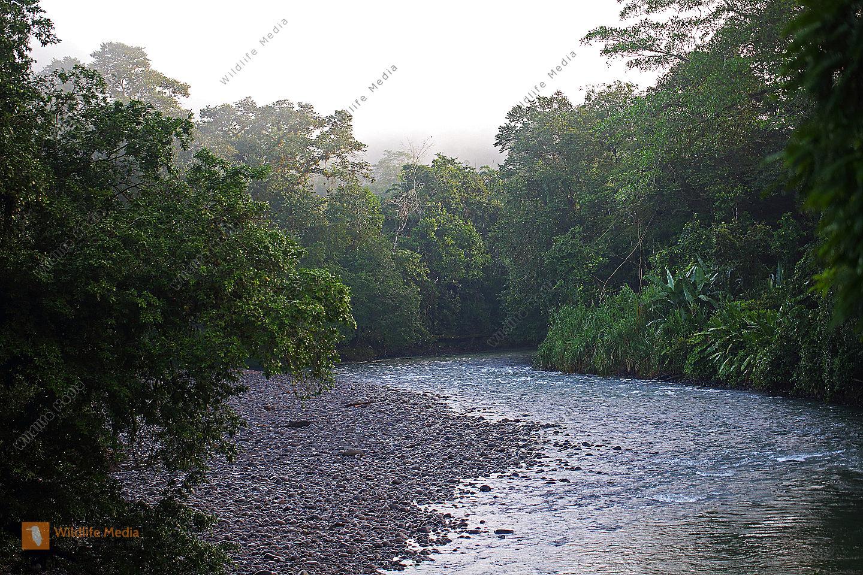 Regenwald mit Fluß