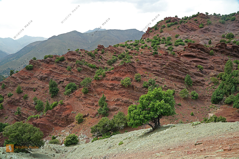 Felslandschaft Marokko