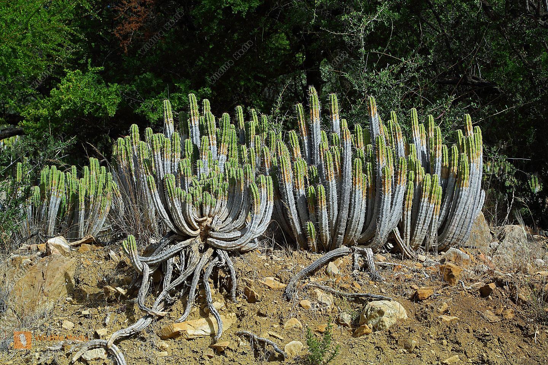 Trockenwald Marokko
