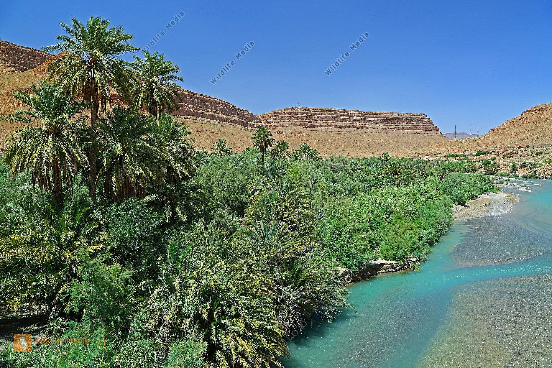 Flussoase Marokko