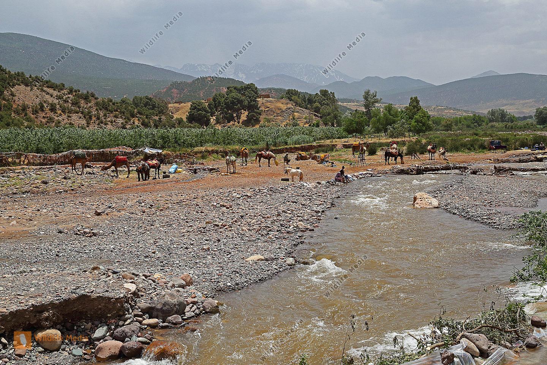 Flusstal mit Hohem Atlas
