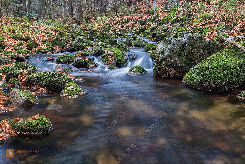 kleine Ohe Waldbach Kleine Ohe forest creek