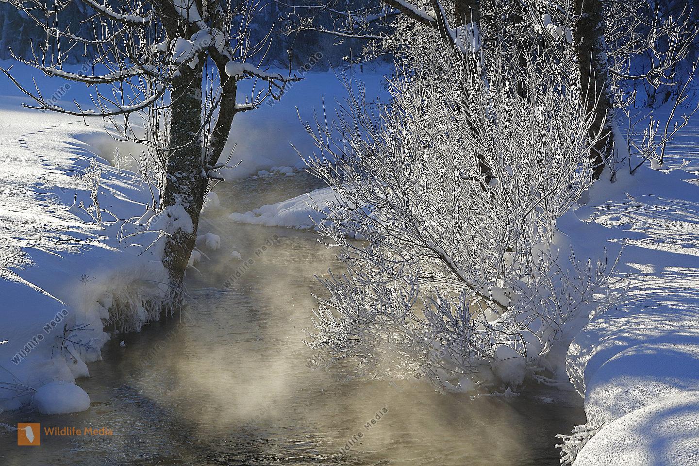 Dampfender Waldbach im Winter