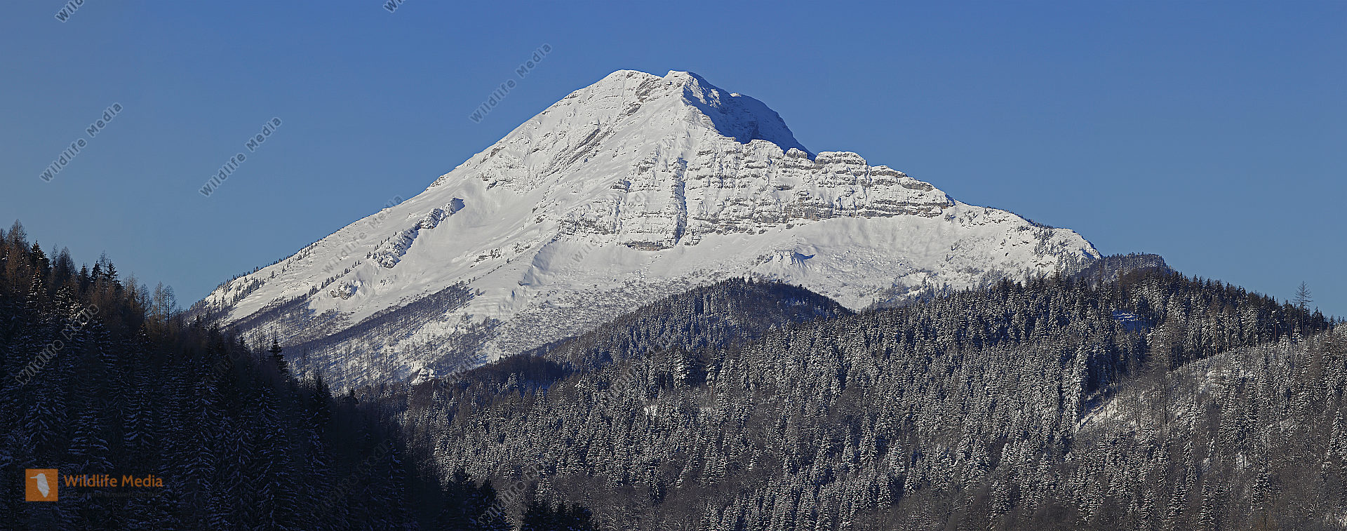 Ötscher im Winter Panorama
