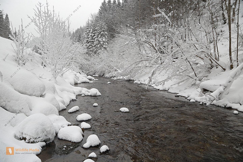 Vereister und Verschneiter Waldbach