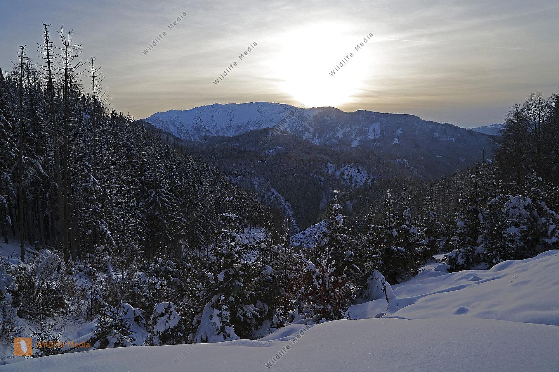 Winterlandschaft Dürrenstein
