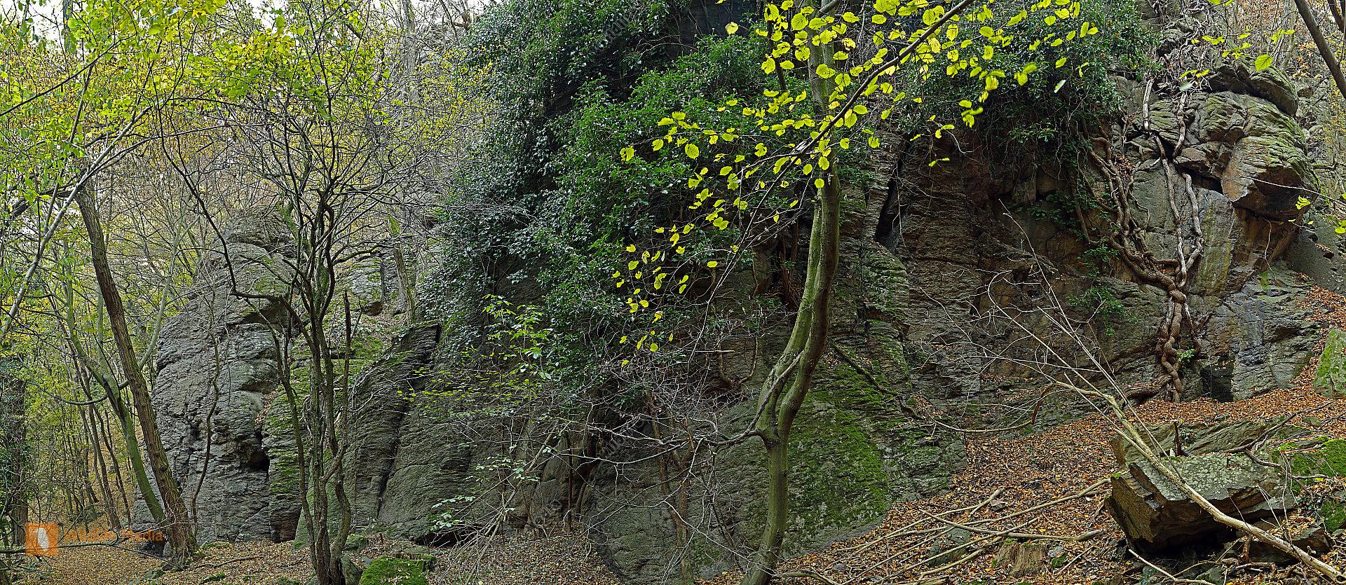 Efeu Panorama