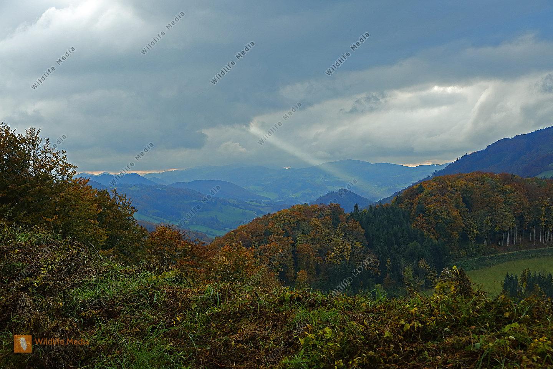 Sonnenstrahl mit Herbstwald