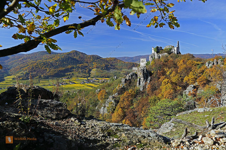 Burgruine Dürnstein im Herbst