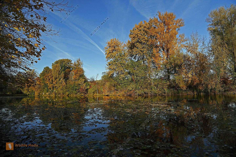 Auwald im Herbst