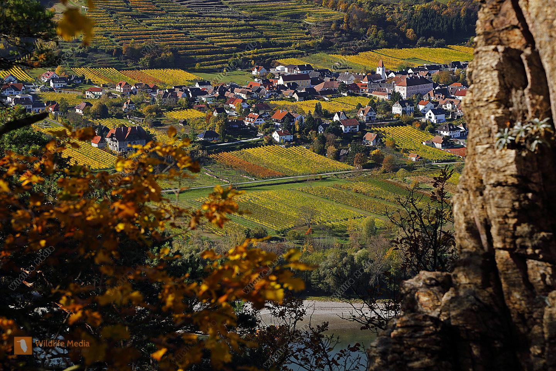 Rossatz Arnsdorf im Herbst