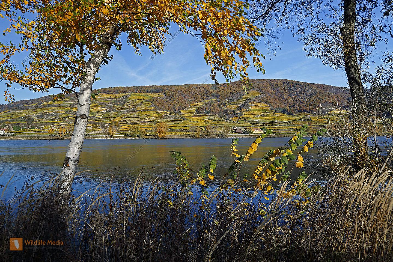 Wachau im Herbst