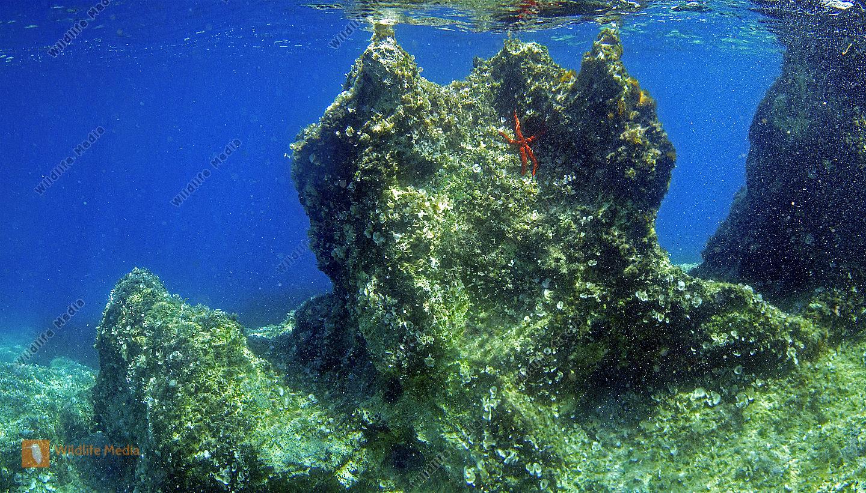 Korcula Unterwasser Panorama