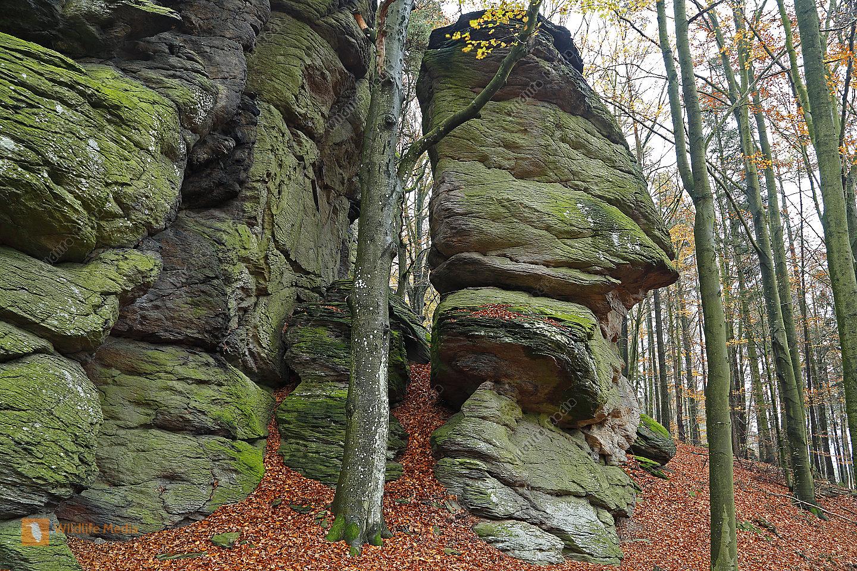 Felslandschaft Aggstein im Herbst