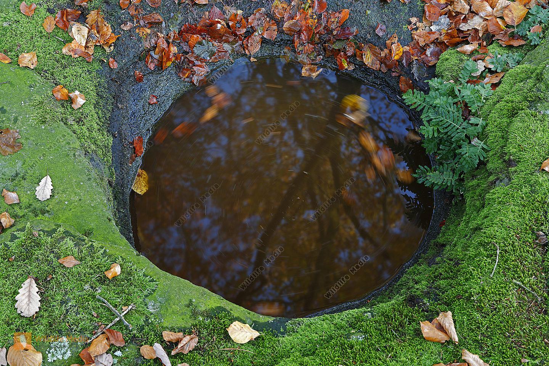 Wasserloch im Fels mit Herbstlaub