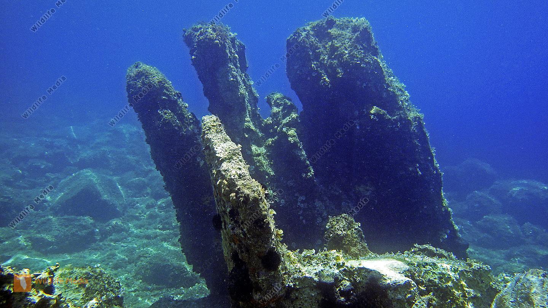 Korcula Unterwasser