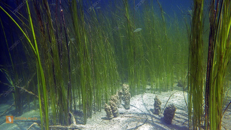 Unterwasserwelt Deutschland