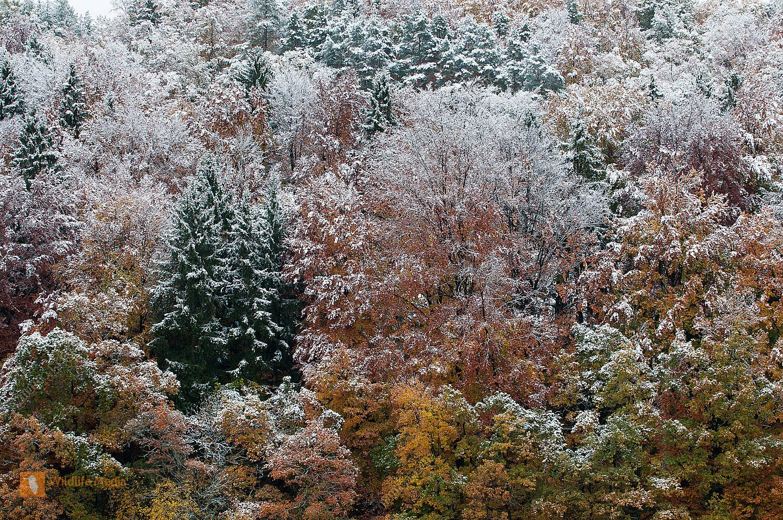 Eiche erster Schnee Fichte Herbst Laubwald Mischwald Rotbuche Winter