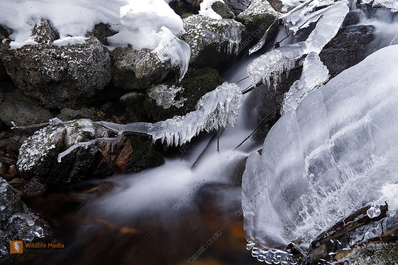 Winterlicher Waldbach