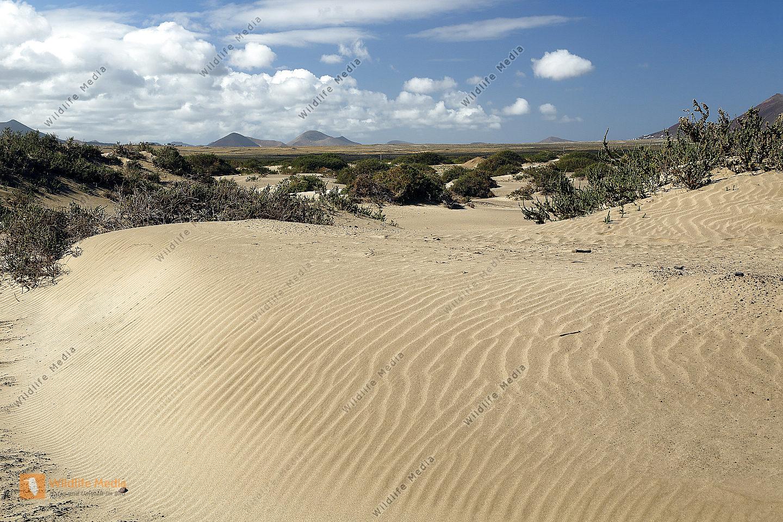 Sanddünen auf Lanzarote