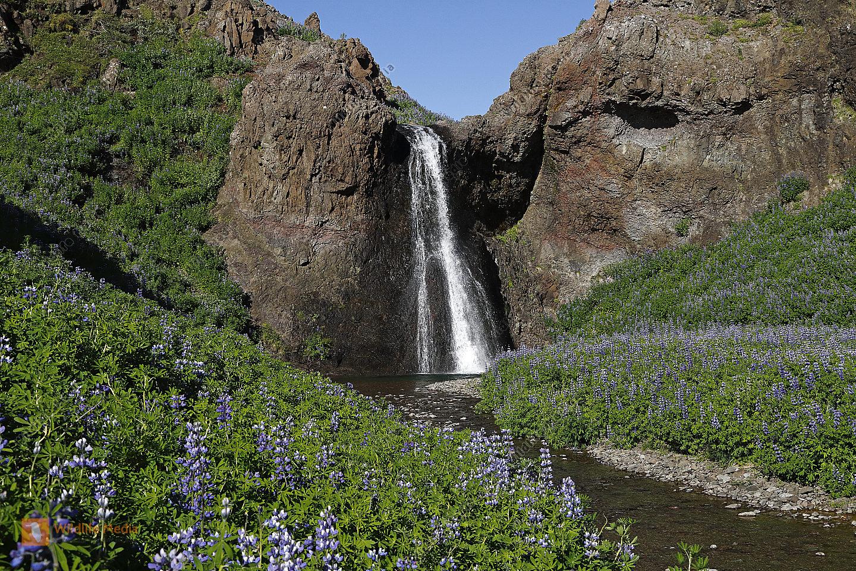 Westfjorde Wasserfall