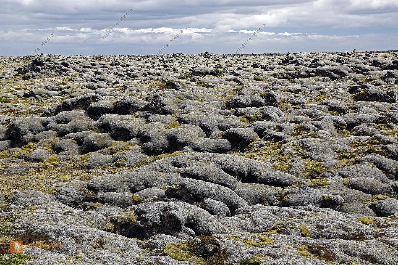 Moosfelder in Island