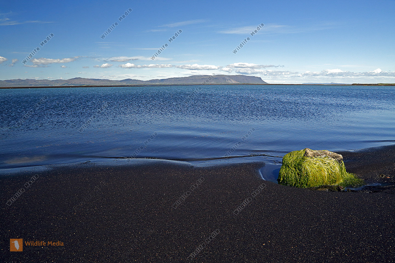Strand in Island