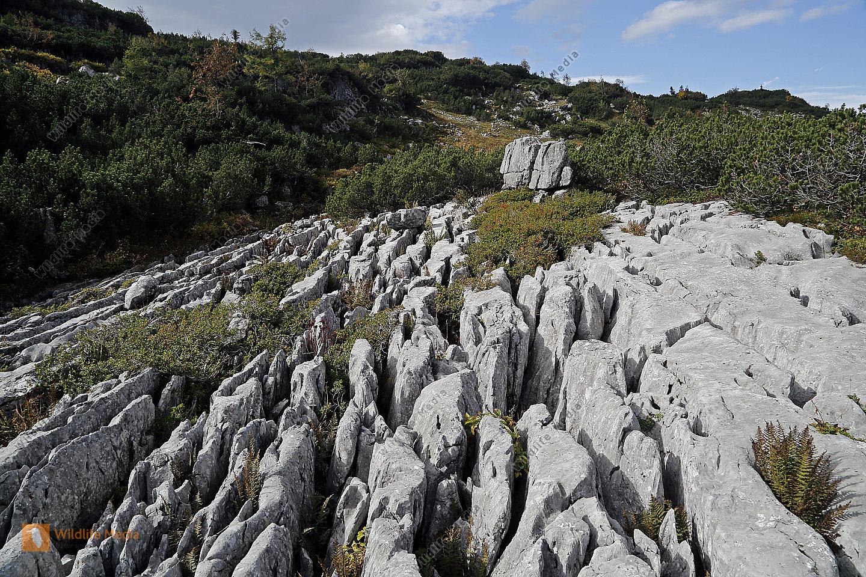 Karstfeld am Dürrenstein